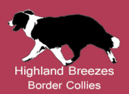 Highland Breezes Border Collies